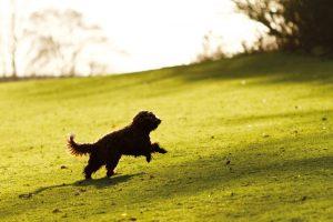 Dog Walking Lincoln